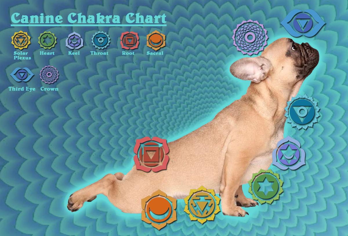 canineChakraChart