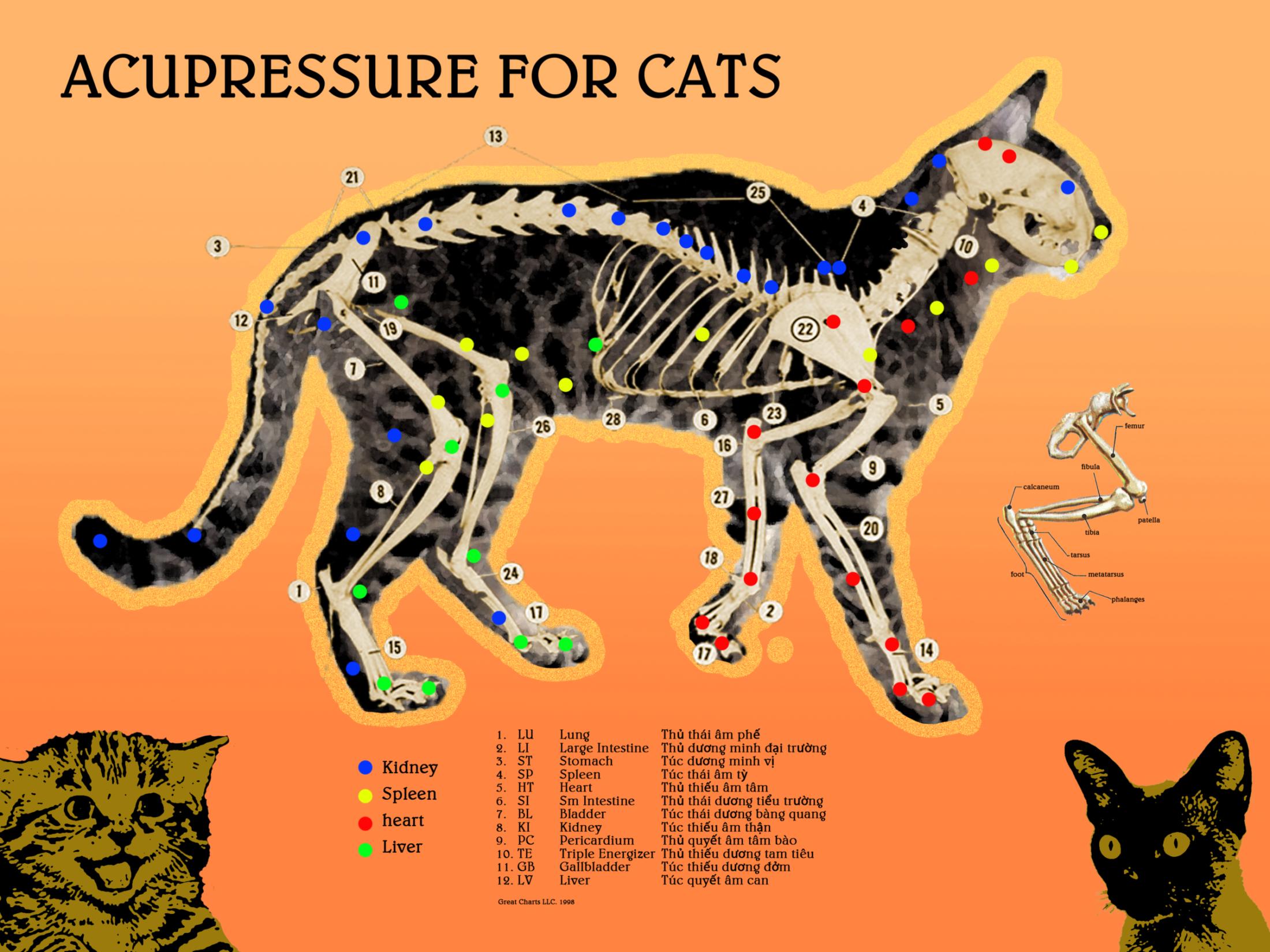 cat_acupressure_poster_final